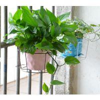 加粗阳台种菜设备铁艺栏杆挂式园艺花架 圆形花盆架壁挂