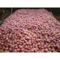 陕西红富士苹果产地价格行情