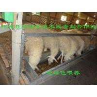 农民创业致富好项目/农作物秸秆养肉羊是财路/育肥小湖羊小母羊