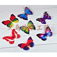 2015新品上市满天星蝴蝶 厂家热卖仿真蝴蝶冰箱贴 塑料工艺品批发