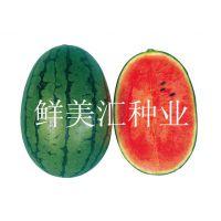 西瓜种子——甜太郎(高品质西瓜)