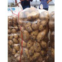 供应黑龙江马铃薯价格