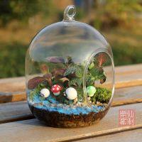 苔藓微景观生态瓶 创意迷你植物DIY盆栽办公室摆件多肉植物花瓶