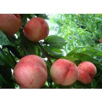水蜜桃_蒙阴水蜜桃_桃小蒙蒙阴水蜜桃含糖量比其它蜜桃高出25%