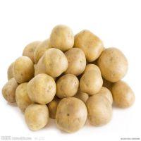 现货销售农家薪土豆 高山速冻土豆 价格实惠 无公害蔬菜土豆