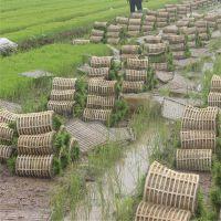 泰州海陵蔬菜育苗盘批发蔬菜育苗穴盘还有多种机插秧盘