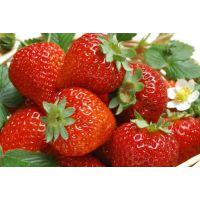 山东泰安红颜草莓苗 章姬 奶油 甜宝草莓小苗批发价格