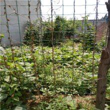 种植园围栏网 蔬菜大棚铁丝网厂家 绿色卷网批发