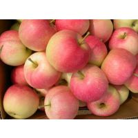 山东嘎啦美八苹果大量上市