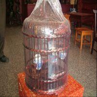 鹦鹉鸟笼 木质鹦鹉鸟笼 工艺木质鹦鹉鸟笼