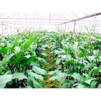 承建不锈热镀锌钢管蔬菜种植温室大棚—瀚洋生态温室工程