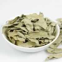 罗布麻叶植物提取物 甘肃现货大量 纯天然 优质高品质