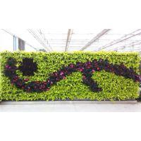 植物墙施工单位|孝感植物墙|武汉植物墙加盟