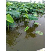河南莲藕塘种植黑塑料膜防渗膜土工膜生产厂家,专业焊接施工