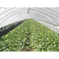 简易钢管蔬菜温室大棚,塑料薄膜大棚—青州瀚洋生态温室工程