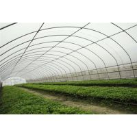 蔬菜大棚钢管厂(图)、南京蔬菜大棚钢管、蔬菜大棚钢管