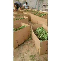 草莓苗哪里有 草莓苗多少钱一株