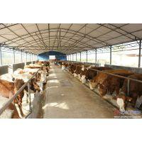 肉牛肉羊养殖前景
