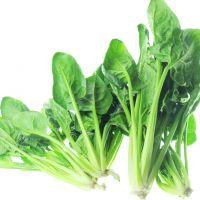 菠菜_绿色食品_有机蔬菜_欧标产品_滋源云生活