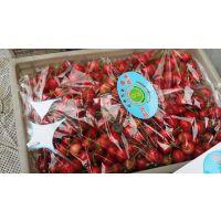 基地出售大樱桃树苗 吉塞拉矮化大樱桃树苗
