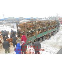 西门塔尔牛价、西门塔尔牛厂家报价、西门塔尔牛现在多少钱、西门塔尔牛交易市场肉牛批发价