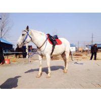 旅游马价格 矮马价格 矮马养殖场
