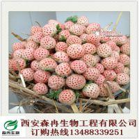 森冉生物厂家热销菠萝莓提取物 白草莓提取物
