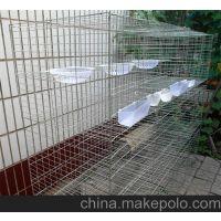 手工焊接鸽子笼 3层4层鸽子养殖笼 加粗加密34斤鸽子笼