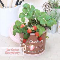 冰淇淋小盆栽 DIY创意迷你栽培办公室桌面花卉植物微景观绿植批发