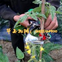 加强版绑枝机 葡萄绑蔓机 茄子绑枝机 质保一年