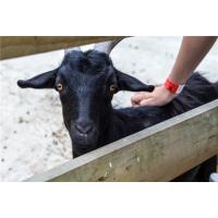 100只黑山羊养殖场建设方案