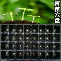 32穴黑色PVC吸塑育苗穴盘 园林花木多肉育苗塑料穴盘盆加工定制