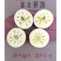 供应云南昭通苹果2001红富士丑苹果原生态种植自然成熟吃情