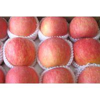今日红富士苹果批发价格多少钱
