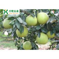 福建柚子苗价格,福建柚子苗种植技术,福建柚子苗管理