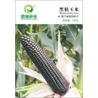 鹏城种业 玉米种子 黑粘玉米种子 早熟 黑玉米 香甜粘 嫩100g/包