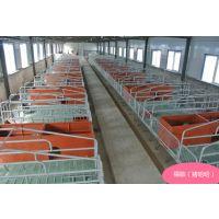 新型母猪产床 辽宁母猪产床 养猪设备福临