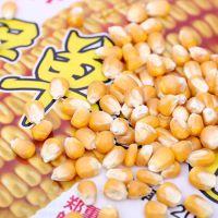 伊单56 高产玉米种子品种 粮食公司直供优质低价早熟玉米种
