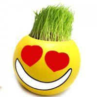 QQ表情长草娃娃-调皮 迷你植物创意一件代发 防辐射草种植
