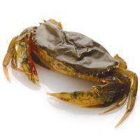 供应批发阿拉斯加蟹(帝王蟹)软壳蟹蟹黄蟹肉