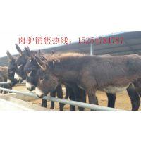 圈养肉驴喂什么饲料-陕西麟游县大型肉驴养殖基地