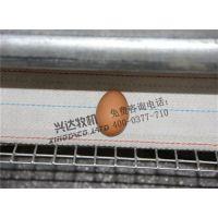 自动捡蛋机销售、西安自动捡蛋机、兴达农牧(在线咨询)