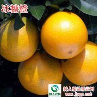 锦蜜冰糖橙品质高产量高价格高