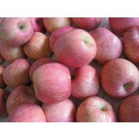 今日陕西冷库红富士苹果价格行情,热线—18700362219。