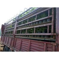 张淑敏猕猴桃种植园(图)|猕猴桃树苗北方种植|滨州猕猴桃树苗