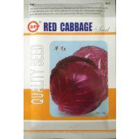 蔬菜种子 荷兰引进优质早红紫甘蓝种子 结球菊苣 早熟品种 10g/包
