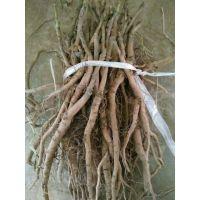 牡丹一亩地能产多少鲜品和多少斤干品?