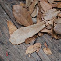 厂家货源 天然树叶 干叶子 植物工艺品 拍摄背景 diy