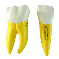 宏思特口腔模型D类各种牙齿模型