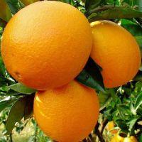 脐橙江西橙子赣南脐橙新鲜水果冰糖橙产地直销鲜橙多汁